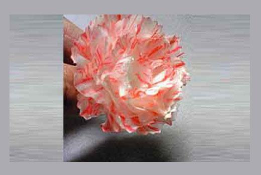 цветок из пластиковой коробки